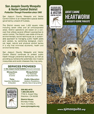 About Canine Heartworm
